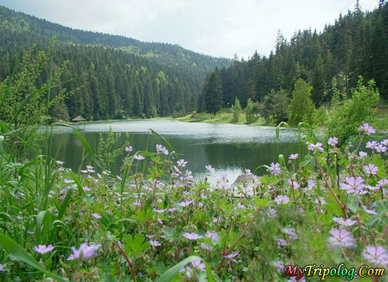 akgol lake in ayancik region in sinop,turkey,lake,forest,akgol,aynacik,sinop,landscape
