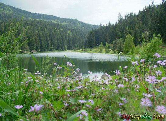 akgol lake in ayancik region in sinop,turkey,lake,forest,akgol,aynacik,sinop,landscape