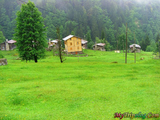 ayder plateu,yayla,rize,turkey,nature