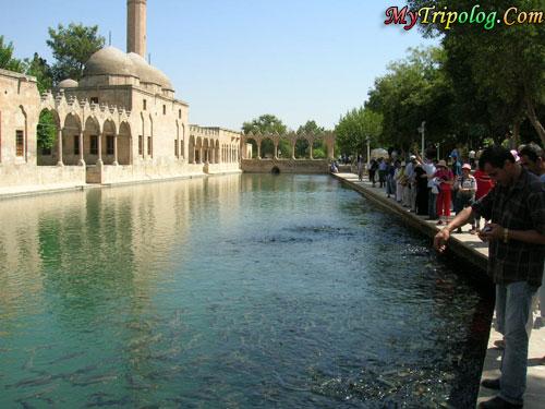 Tourists feeding the fish in Balıklıgöl,balikli,gol,urfa,turkey