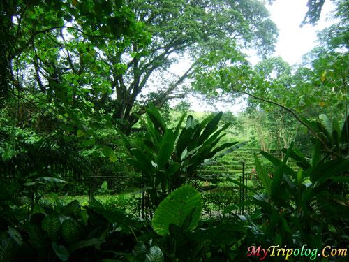 la mesa eco park amphitheater coliseum,la mesa eco park,philippines,east fairview
