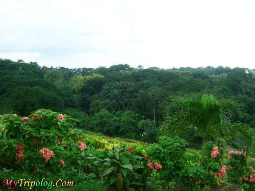 la mesa eco park east fairview,quezon city,manila,flowers,trees,philippines,la mesa eco park