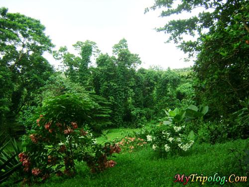 flowers in la mesa eco park east fairview,quezon city,la mesa eco park,manila,ncr,philippines