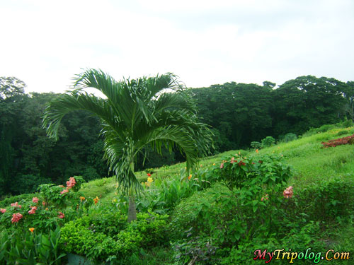 more trees, trees in Philippines, Philippines province, province in Philippines, trees in province