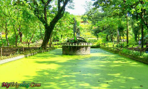 La mesa eco park forest in the city philippines travel - La mesa eco park swimming pool photos ...