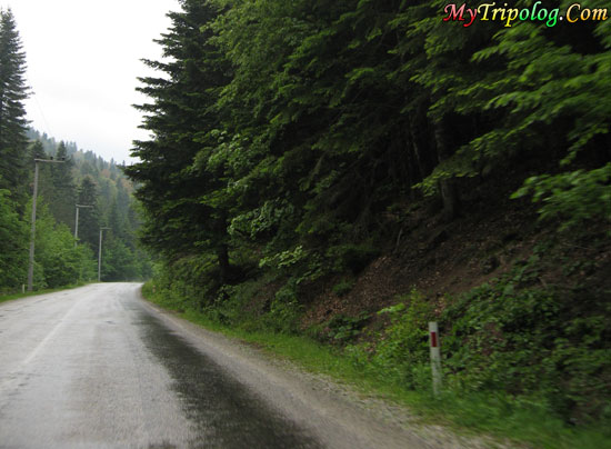 road to abant,bolu,turkey,road,abant