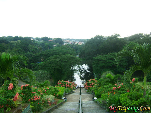on top of steps flowers lagoon forest at la mesa eco park,quezon city,philippines
