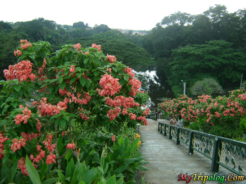 stairs at la mesa eco park and fishing lagoon,lagoon,flowers,quezon city,philippines