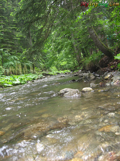 a stream before abant lake,river,bolu,abant,turkey