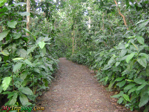 way deep into the forest in la mesa eco park,quezon city,east fairview,philippines