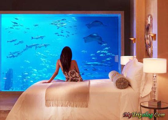 atlantis the palm hotel,view dubai,woman in hotel,woman,aquarium,dubai hotel