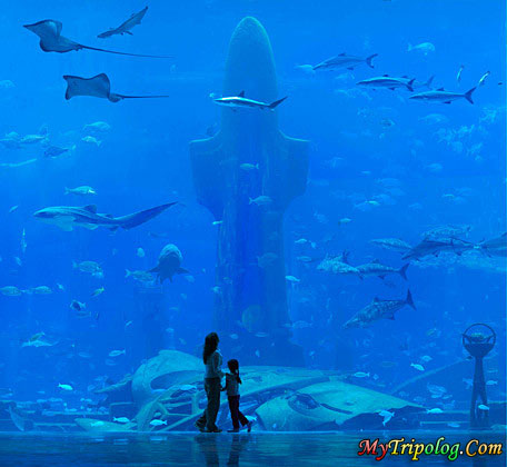 amazing dubai aquarium,united arab emirates,uae,dubai,aquarium