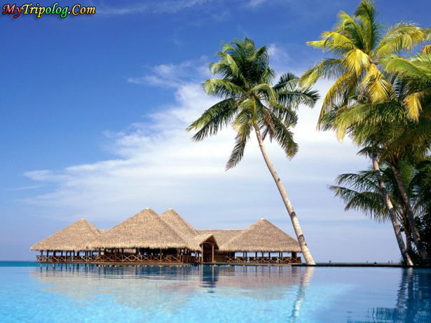 maldives,palms on beach,water bungalows,beautiful view,maldive islands