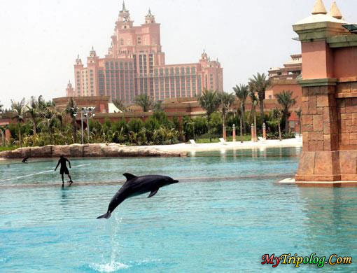 dolphin,dubai,uae,park ,pool,animal photo,emirates