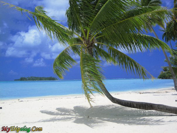 tahiti,pearl beach,bora bora,resort in bora bora,palm on beach,sea,