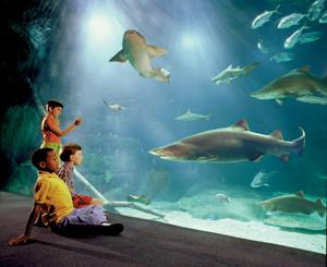 The Resort City Virginia Beach Travel Around The World