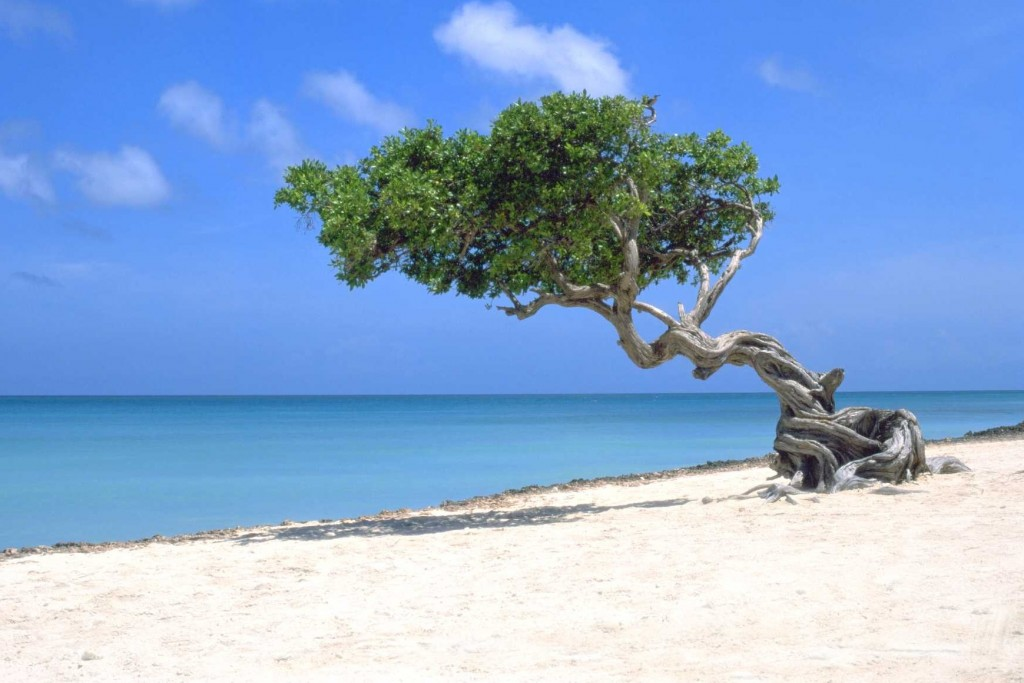 Explore The Beauty Of Caribbean: Most Beautiful Beaches Of Aruba