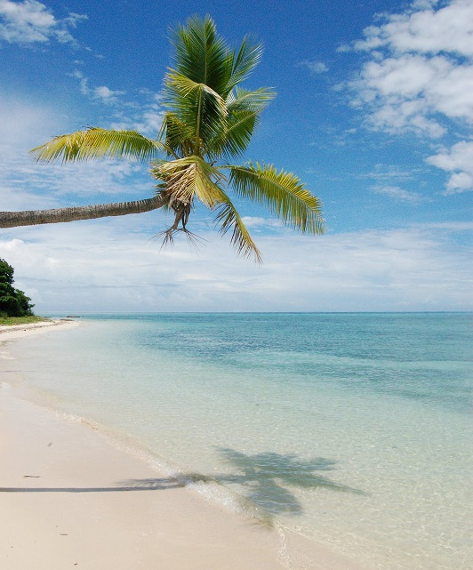 palm tree on sandy white beache Fiji Islands - .................best Island................