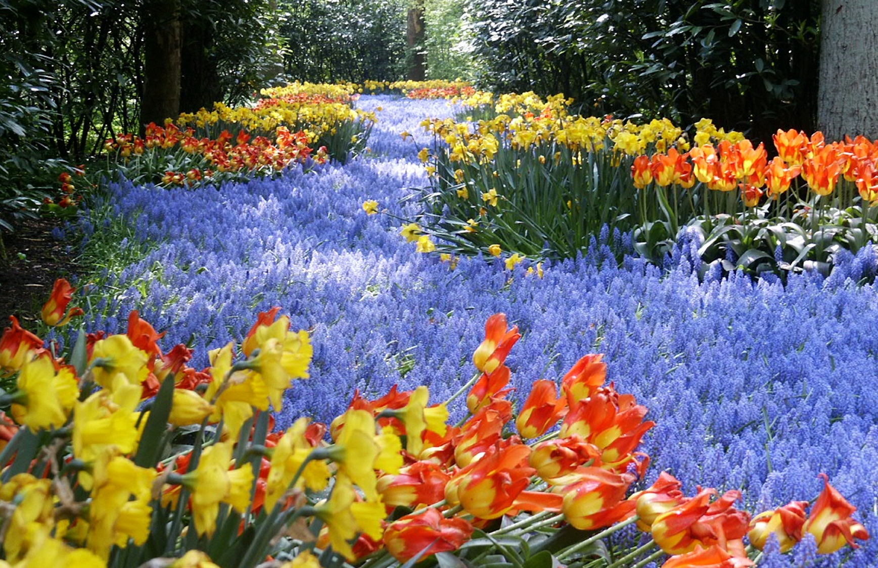 the keukenhof world s largest flower garden travel
