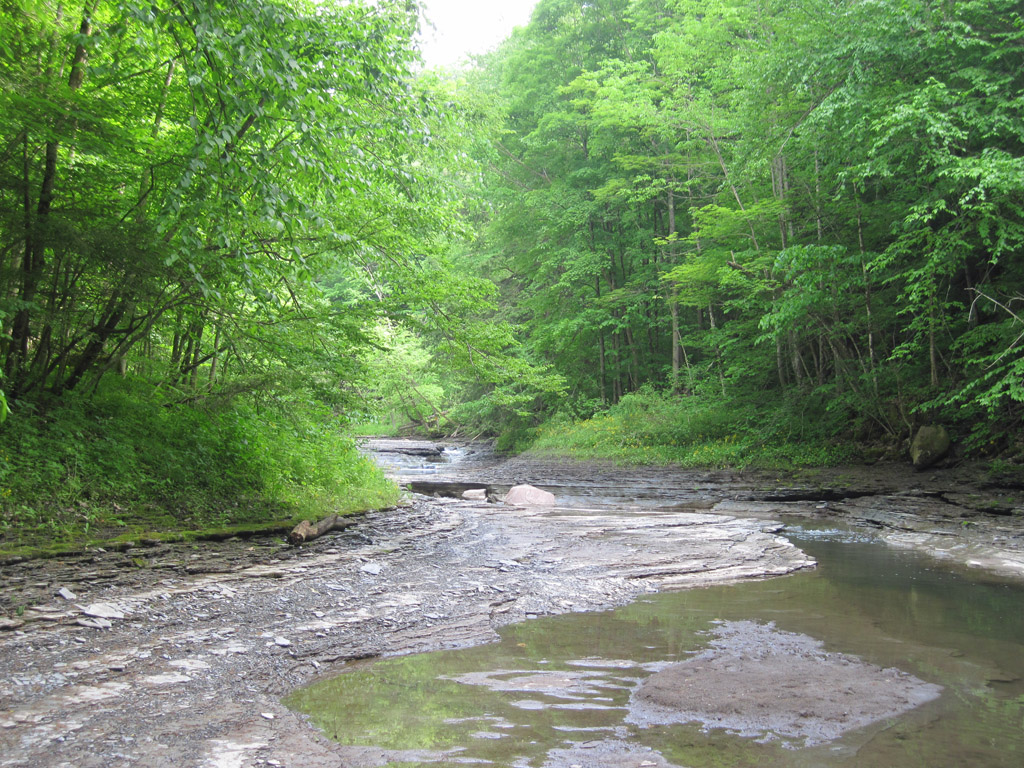 chautauqua creek gorge state forest westfield ny